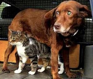 blinddog-cat-lg