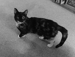 Rachel-miller-cat