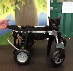 cat-walker-lg