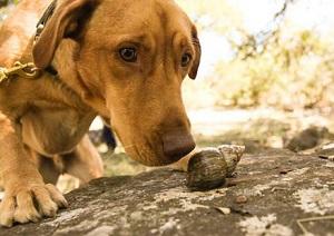 dogs-snails-lg