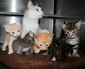 potsdam-kittens-lg