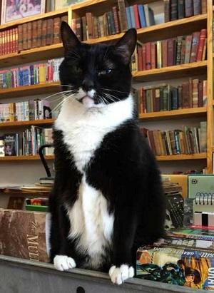 bookstore-cat-lg