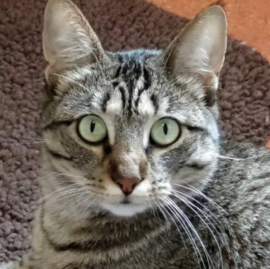 Austin Humane Society - Vera the cat