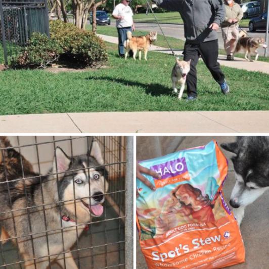 Texas-Husky-Rescue-Halo-Pets-Donation