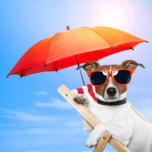 dog with umbrella and sunglasses