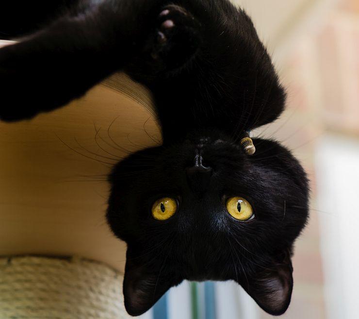 upside-down-cat740w