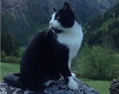 Grimwald Cat