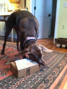 Wande and cardboard box