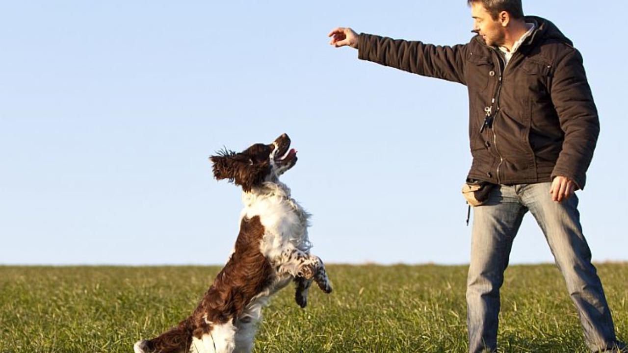 Praise Not Punish – The Basic Winning Philosophy for Dog Training