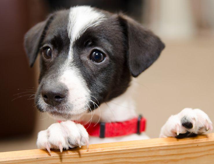 Crowd-Sourced Canine Behavior Study