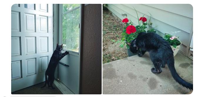 Halo the senior cat