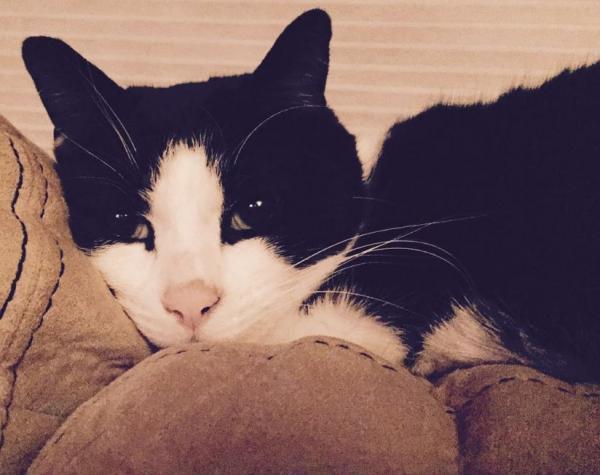 Mr. Boo the cat