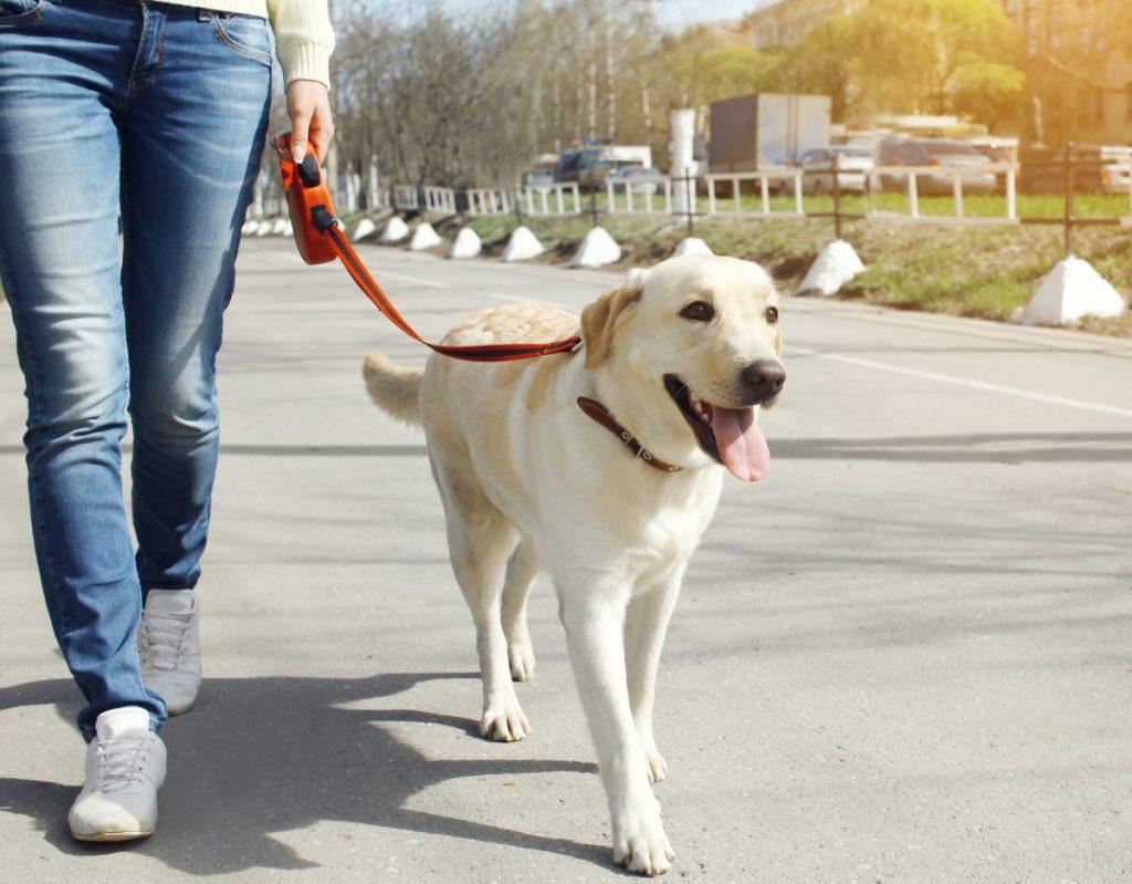 Dog training - walking on a leash