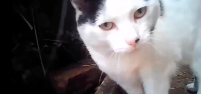 Cat on body camera