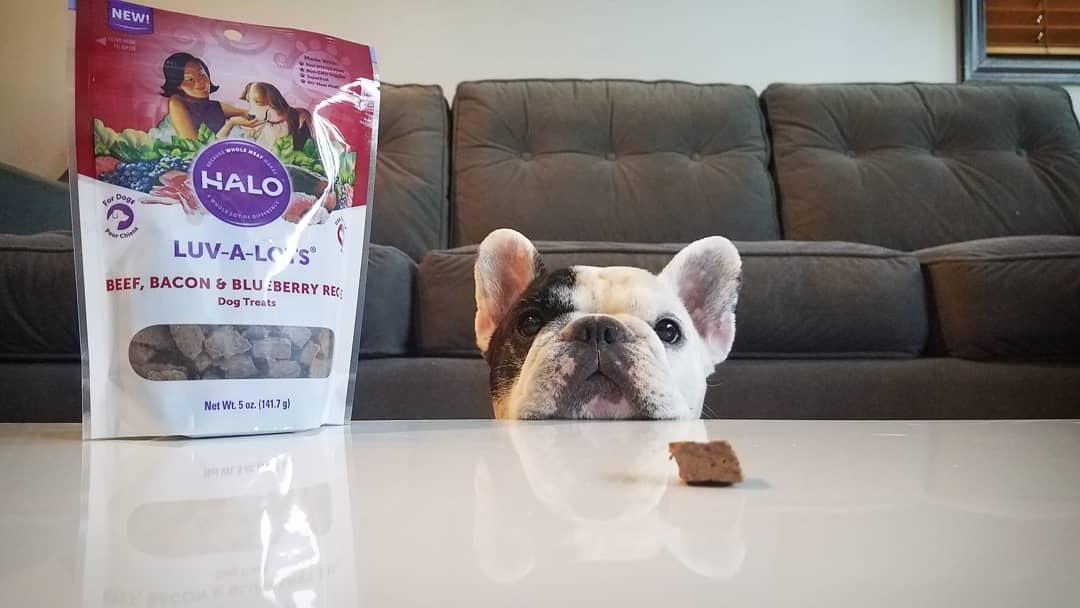 delicious dog treats