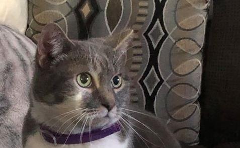 Jazz eats Halo Holistic Sensitive Stomach recipe for cats